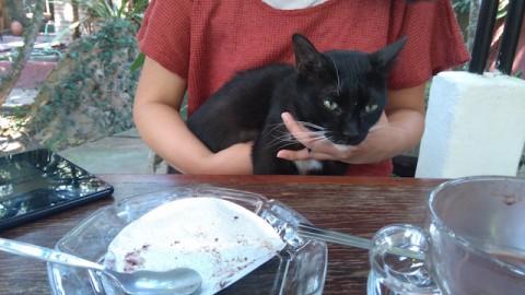 スワンメーオの猫